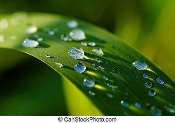 drops - sumer rain drops on green plants