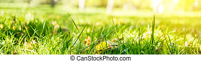 Summer abstract bokeh background