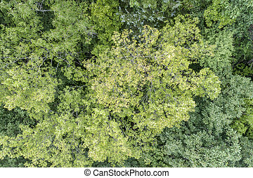 summer aerial view of green forest