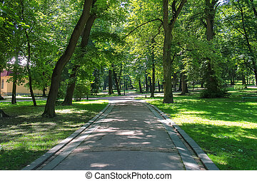 Summer alley in the city park