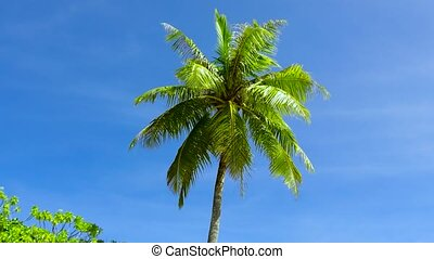 palm tree over blue sky - summer and exotic nature concept -...