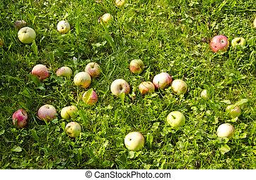 summer apples on grass