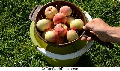 summer apples washing