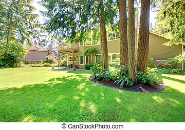 Summer back yard with large house and pine trees.