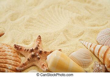 Cockleshell - Summer background. Cockleshell on sand