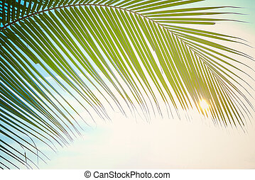 Summer background, Leaf palm at sunshine