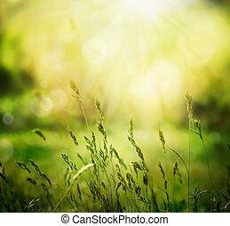 Summer background - Spring or summer abstract nature ...