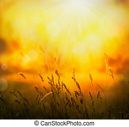 Spring or summer abstract nature background with grass in the meadow and sunset in the back