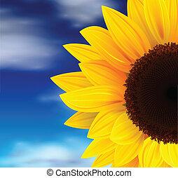 Summer background, sunflower over blue sky, vector.