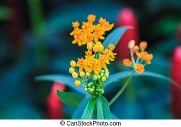 summer background with beautiful yellow flowers