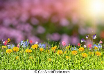 Summer background with flower