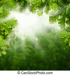 Summer Background with Green Oak Leaves and Bokeh Light