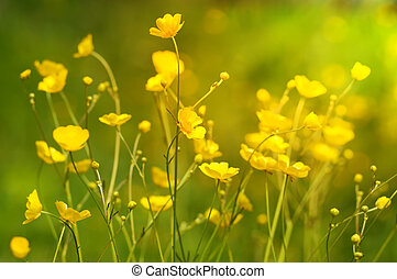 Summer background with yellow wildflowers