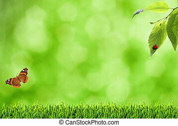 Summer backgrounds with blurry bokeh, grass and butterfly