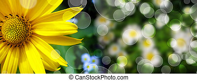Summer banner with daisy  in green grass