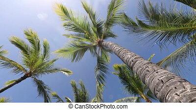 Summer beach background palm trees against blue sky panorama, tropical Caribbean