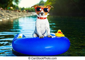 summer beach dog - dog on blue air mattress in refreshing ...