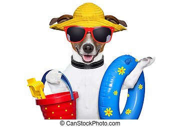 summer beach dog - dog ready for beach with bucket swim ring...