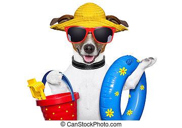 summer beach dog