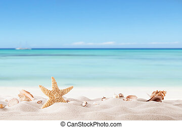 Summer beach with strafish and shells - Summer concept with ...