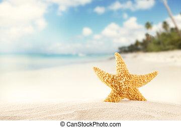 Summer beach with strafish