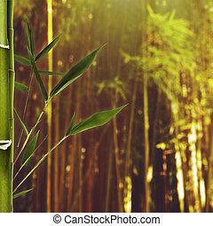 Summer beauty day in the bamboo forest