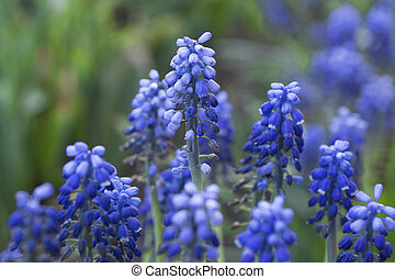 Summer blue small flowers