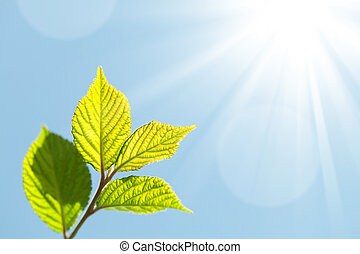 Summer bokeh background with green leaves