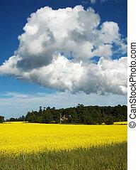 Summer Bounty - Canola Field in full bloom under a summer...