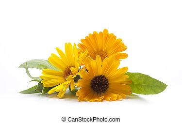 Summer bouquet of herbs closeup