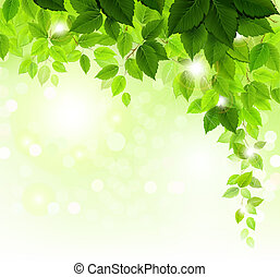 green leaves  - Summer branch with fresh green leaves