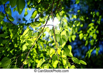 Summer Branches