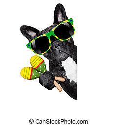 summer brazilian dog - brazil french bulldog dog enjoying...