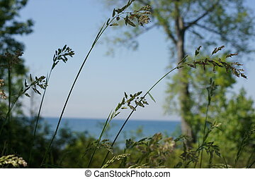 Summer breeze - Green foliage with lake background.