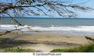 Summer breeze in the beach.