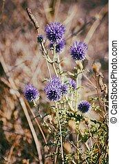 Flower Sunny Field