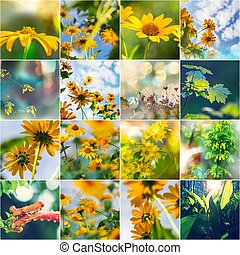 Summer collage - Collage of the Summer flowers