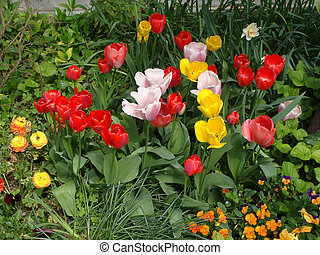Summer colorful field of tulips