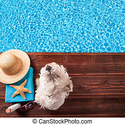 Summer concept with dog on wooden planks - Concept of summer...