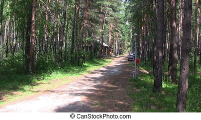 Summer coniferous forest pathway