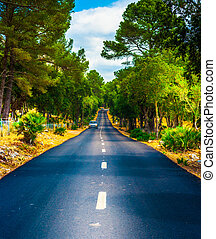 Summer Country Road With Trees.
