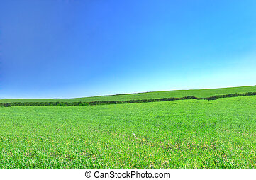 summer country view