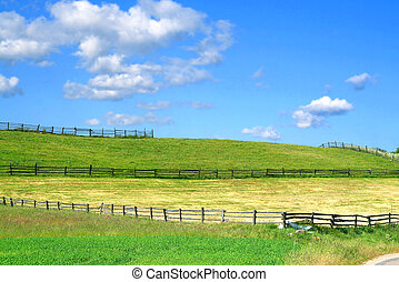 summer country view with fields and fences