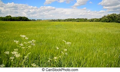 Summer countryside in central part of Russia