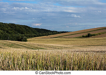 summer countryside lansdscape