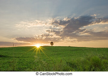 Summer dawn with a single tree