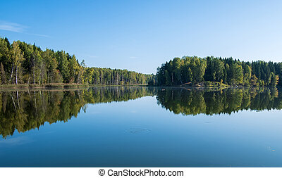 summer cloudless day by the lake in the forest