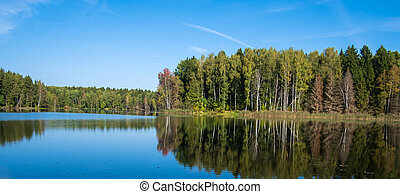 summer day by the lake in the forest