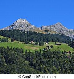 Summer day in Engelberg, Switzerland. Rural scene. - Rural...