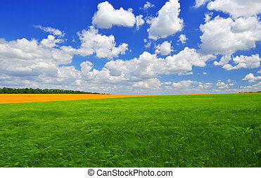 Summer day on the green field
